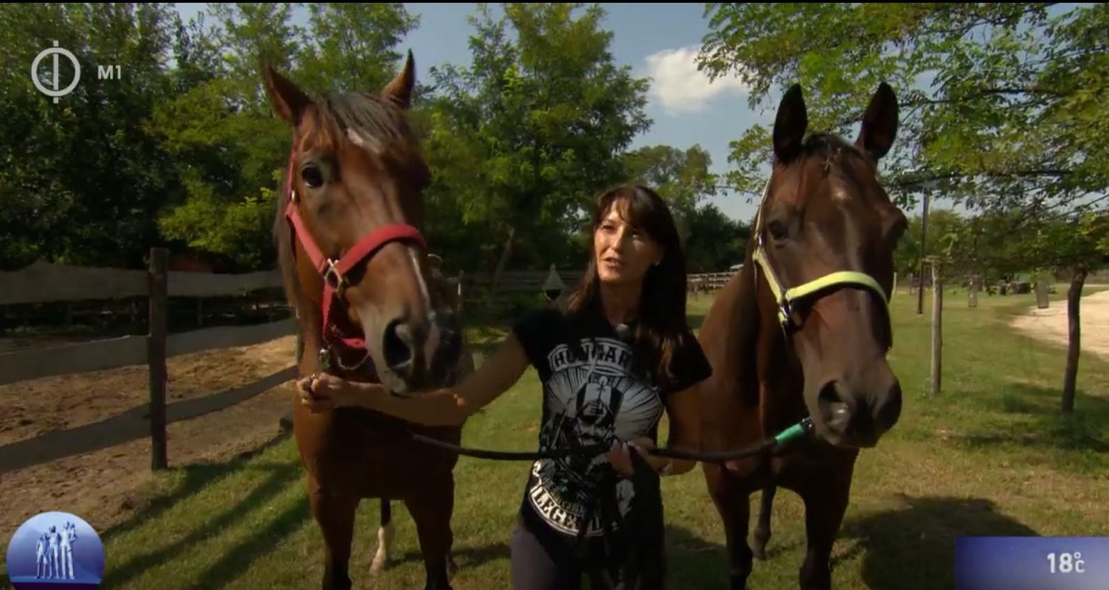 """""""Rendszer és következetesség – ez nemcsak a gyermeknevelésben, hanem a lovak életében is elengedhetetlen"""""""